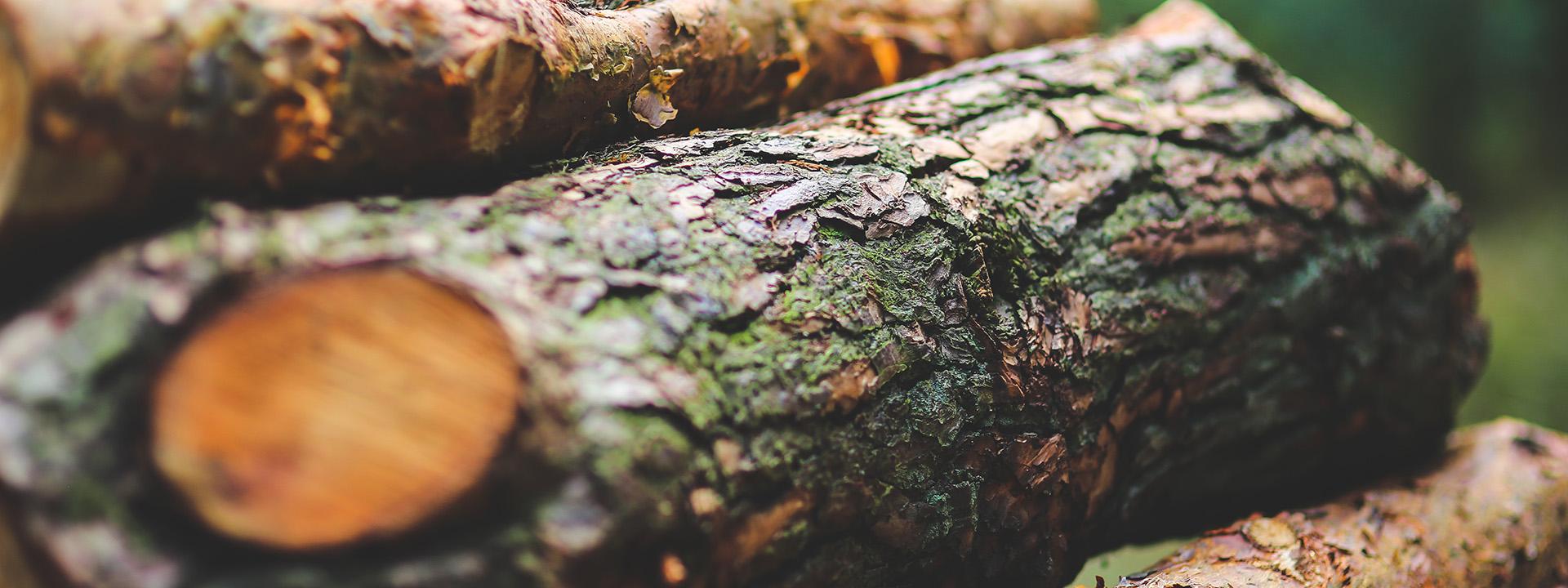 sous image banière araucaria paysages entreprise paysagiste toulouse