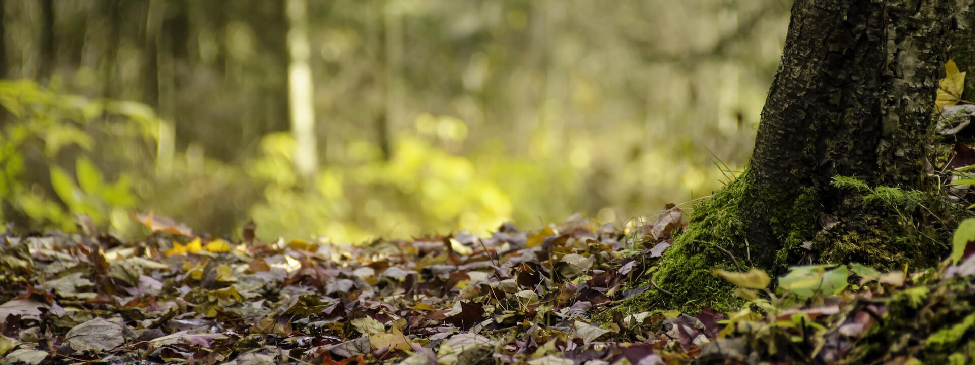 banière araucaria paysages entreprise paysagiste à toulouse
